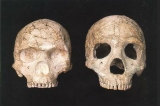 Neanderthals and Modern Humans : a Regional Guide